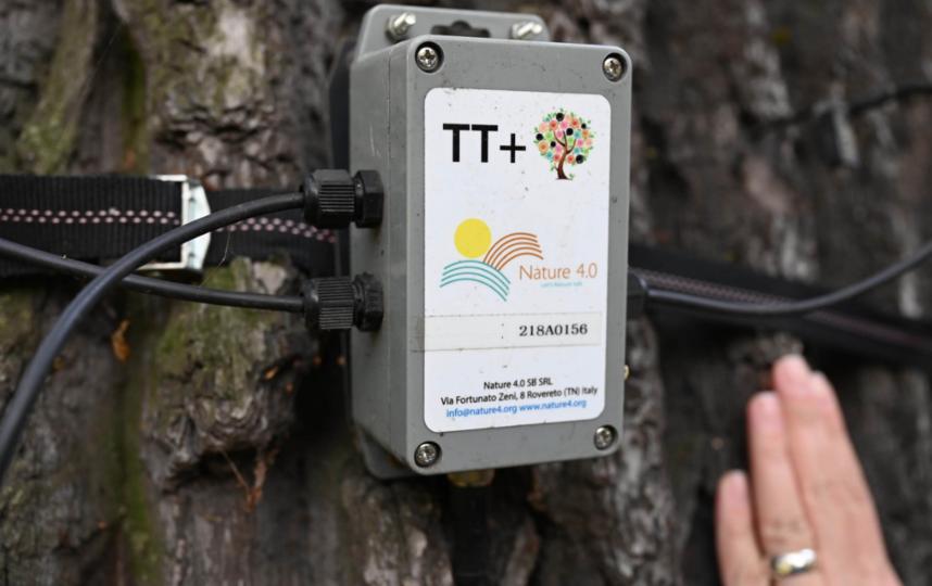 """Датчик Tree Talker в режиме онлайн снимает показания с петровского дуба: состояние коры, почвы, температура, влажность. Эти данные образуют базу для анализа и прогноза. Фото Святослав Акимов, """"Metro"""""""