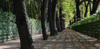 Ковид пошёл на пользу петербургским деревьям