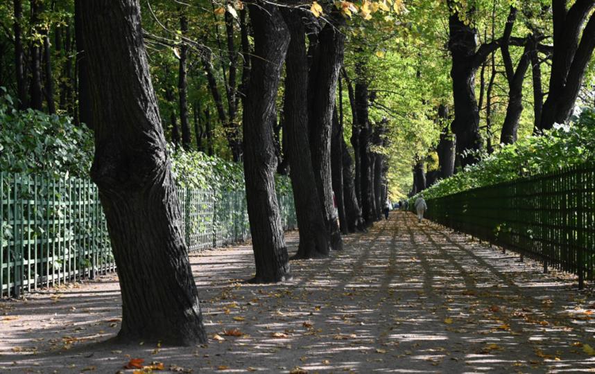 """Ширина дорожек в Летнем саду позволяет сохранять пресловутую социальную дистанцию. На входе есть маски. Фото Святослав Акимов, """"Metro"""""""