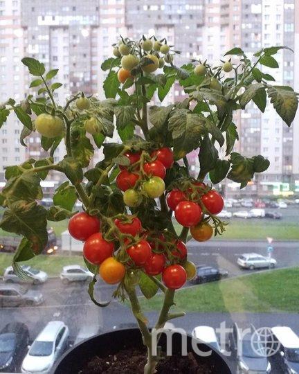 """Огород в квартире Елены Дрегваль. Фото instagram.com @elena.dregval, """"Metro"""""""