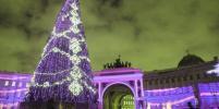 На Дворцовой площади установят живую новогоднюю ель