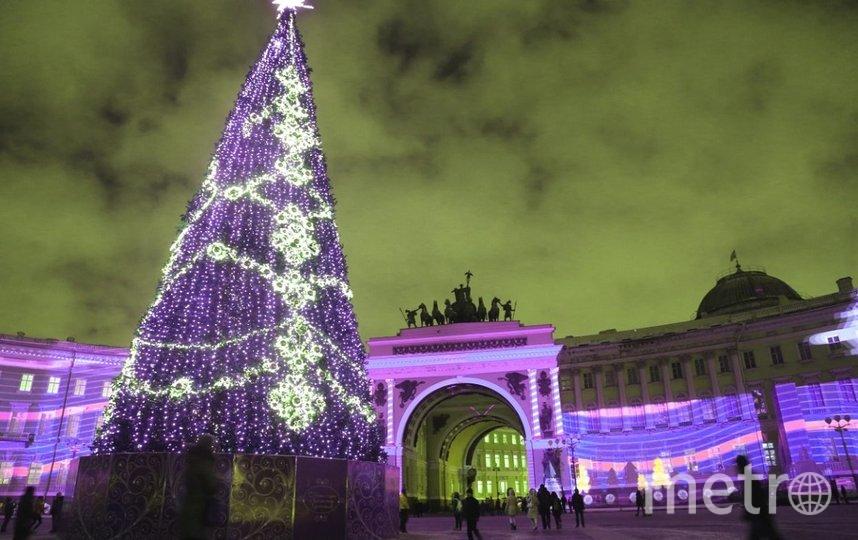 Новогоднюю ель планируется установить на Дворцовой площади к 20 декабря. Фото gov.spb.ru