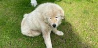 В столичном Одинцове идёт охота на собак