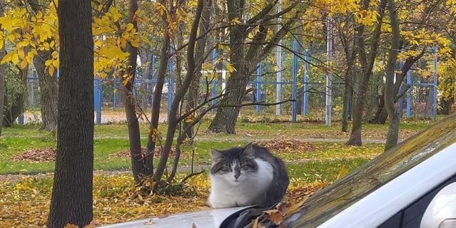 """Идёшь вот так с обеда, а вокруг такие """"пейзажи"""" - сидит котище, дремлет."""
