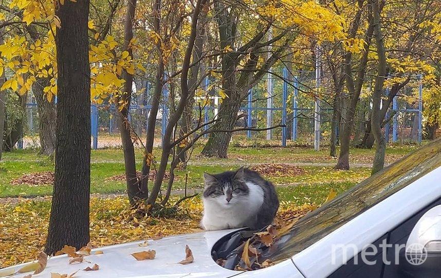 """Идёшь вот так с обеда, а вокруг такие """"пейзажи"""" - сидит котище, дремлет. Фото """"Metro"""""""
