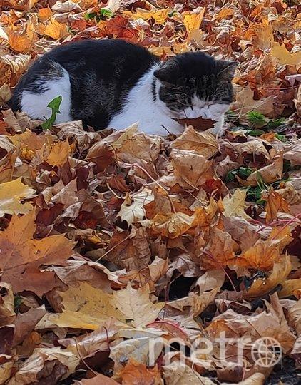 """К носу этого котика приклеился листик. Фото Ирина Кондратьева, """"Metro"""""""