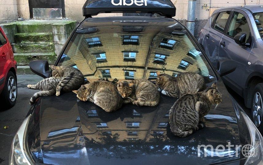 """Фото «Лиговские коты» для конкурса Catspotting. Фото Юлия Исправникова, """"Metro"""""""