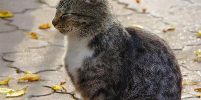 Только что вернулась из тура по Золотому Кольцу, и этот кот был встречен в Сергиевом Посаде. Он тоже наслаждался последними теплыми солнечными осенними днями, которые теперь уже остались только на фотографии.