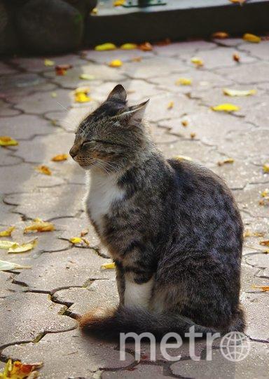 """Только что вернулась из тура по Золотому Кольцу, и этот кот был встречен в Сергиевом Посаде. Он тоже наслаждался последними теплыми солнечными осенними днями, которые теперь уже остались только на фотографии. Фото Лида Неробова, """"Metro"""""""