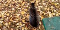 Уличные коты стали объектом фотоохоты в Петербурге