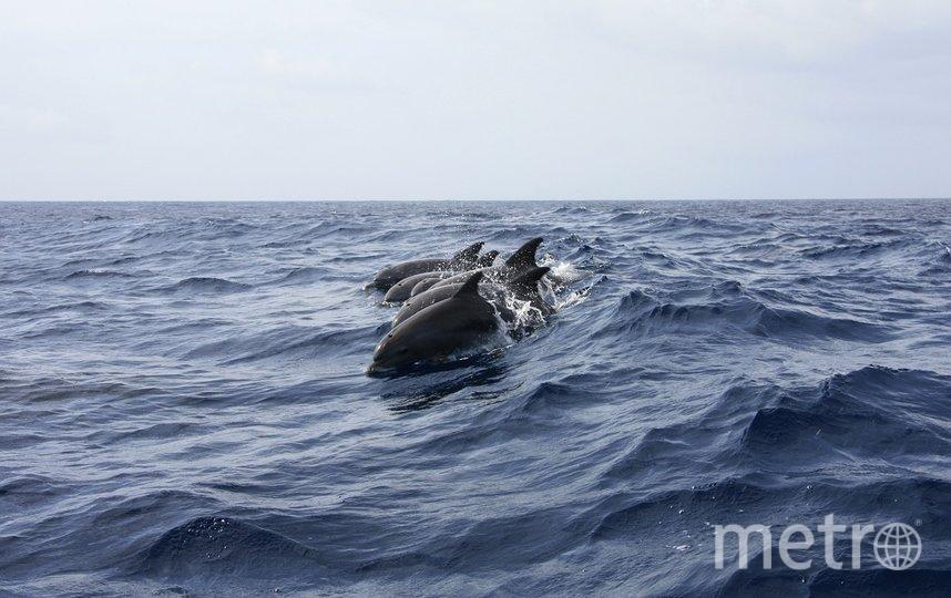 """""""Сезон выбросов"""" дельфинов на берег начнется весной. Фото pixabay.com, """"Metro"""""""
