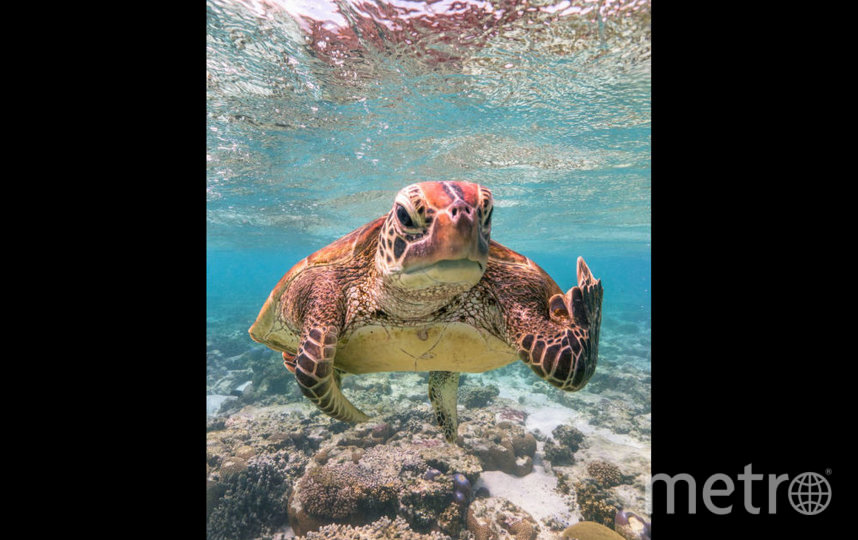 """Terry The Turtle Flipping The Bird"". Фото Mark Fitzpatrick, https://www.comedywildlifephoto.com/"