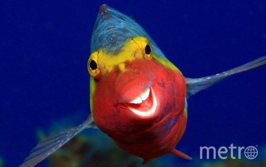 """Smiley"". Фото Arthur Telle Thiemenn, https://www.comedywildlifephoto.com/"