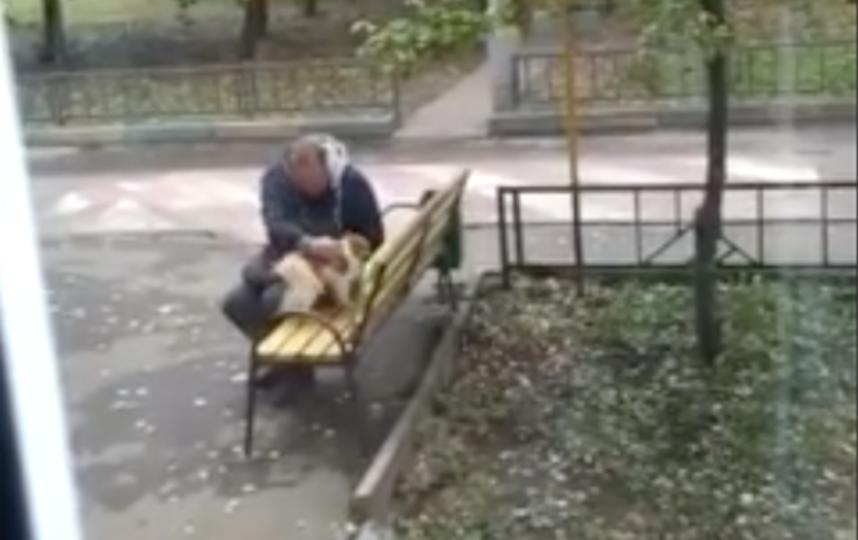 Ольга сняла на видео момент, который так тронул её: сосед расчёсывает любимую собаку. Фото скриншот видео пользователя «яндекс.района» ольги т.