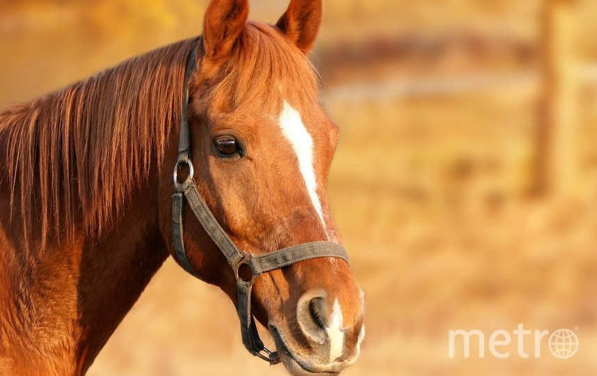 """Тыквы, которые послужили декором, станут кормом для лошадей. Фото pixabay.com, """"Metro"""""""