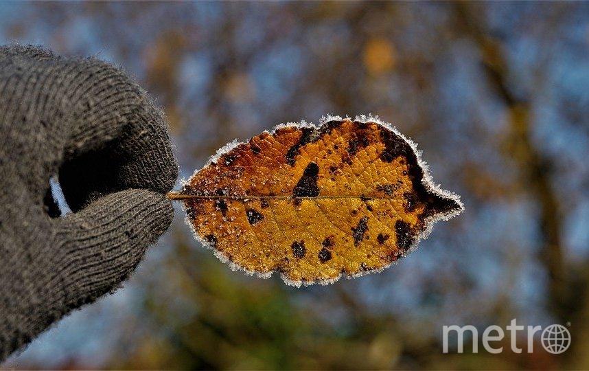 Наступил последний, самый холодный осенний месяц. Фото pixabay.com