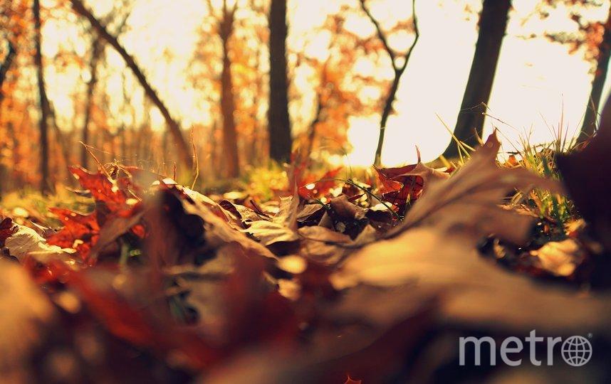 """""""Золотая осень"""" в европейской части России продолжится и в ноябре. Фото pixabay.com, """"Metro"""""""