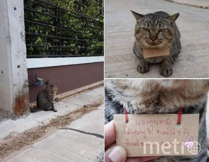 Кот вернулся с долгами. Фото facebook.com/changpuaksiam.