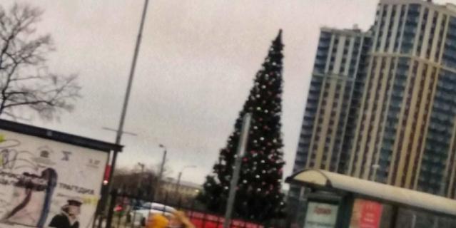 Первые елки уже появились в Петербурге.