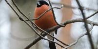 Орнитологи рассказали, каких птиц можно будет увидеть зимой в Петербурге