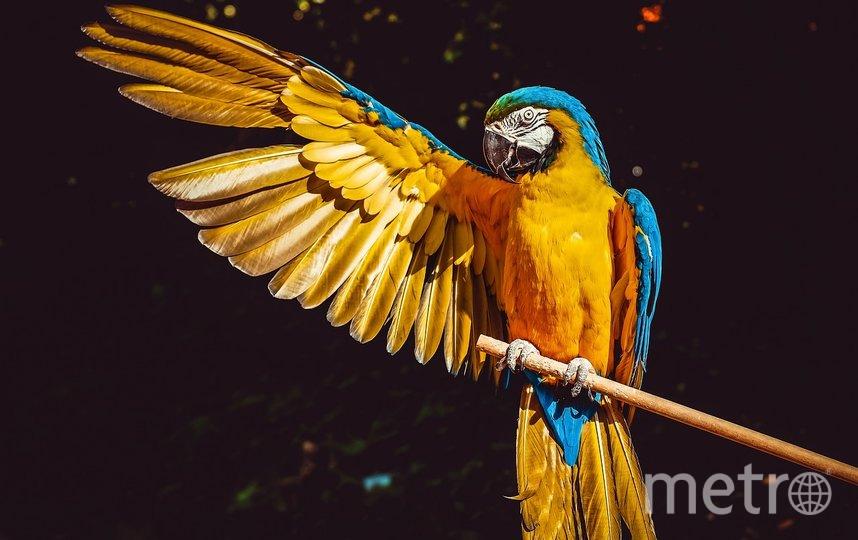 """Попугай. Фото pixabay.com, """"Metro"""""""