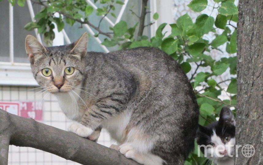 """кошка из Купчино. Фото Марина, """"Metro"""""""