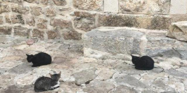 Все котики сфотографированы в Черногории в городке Котор.