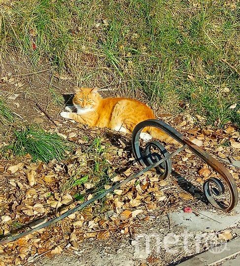 """Котик. Фото Светлана, """"Metro"""""""