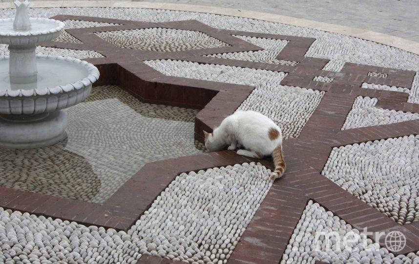 """Уличная кошка возле Софии. Стамбул. Фото Валентина, """"Metro"""""""
