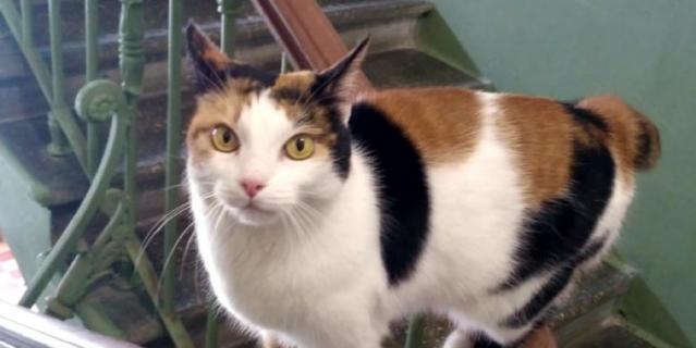 Это соседская кошка Люся- наша всеобщая любимица! Она умеет ходить по перилам и охраняет подъезд от грызунов! Не боится собак со второго этажа, но опасается кота с первого!.