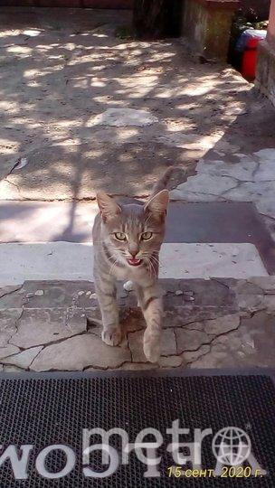 """Кошка с улицы приходила в гости. Фото Яков, """"Metro"""""""