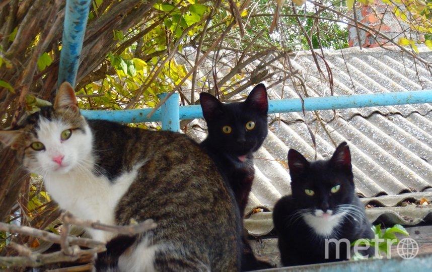 "Коты. Фото ""Metro"""