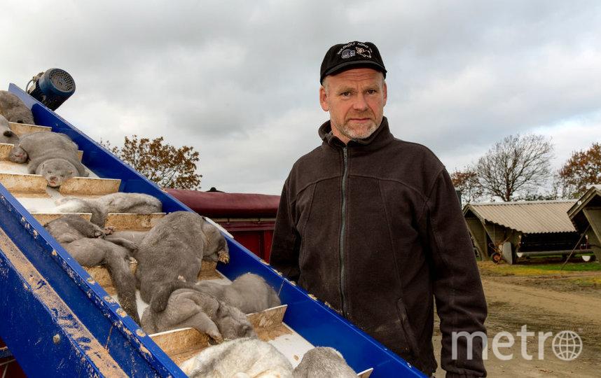 Вот так уничтожали норок в Дании. Фото Getty