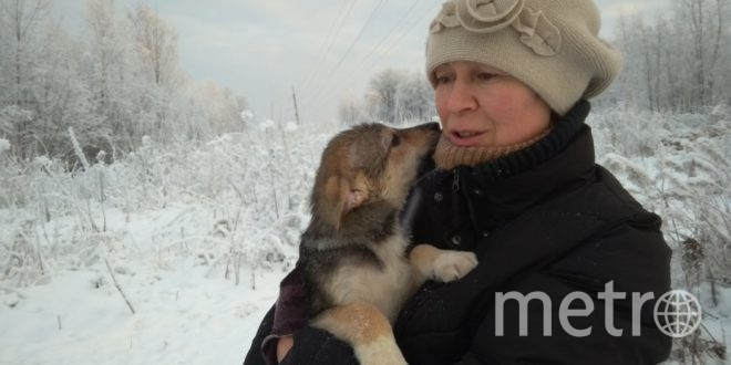 Жительница Ленобласти уже более десяти лет спасает попавших в беду собак. Фото Предоставлено героем материала.