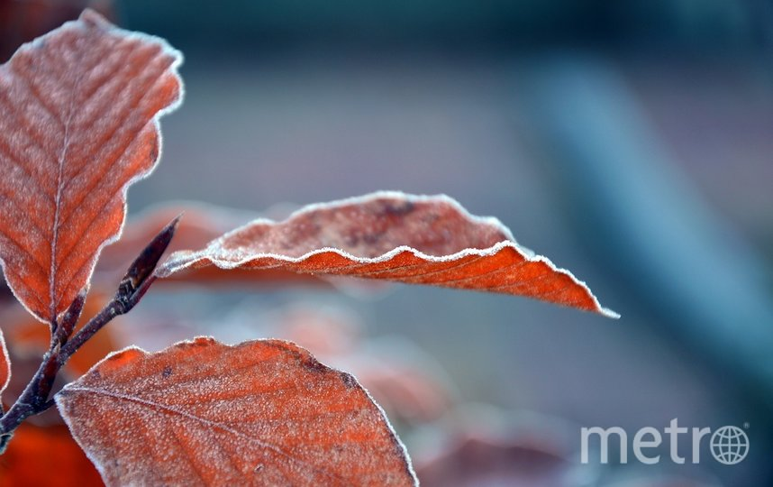 """Предстоящая неделя ожидается ветренной. Фото pixabay.com, """"Metro"""""""