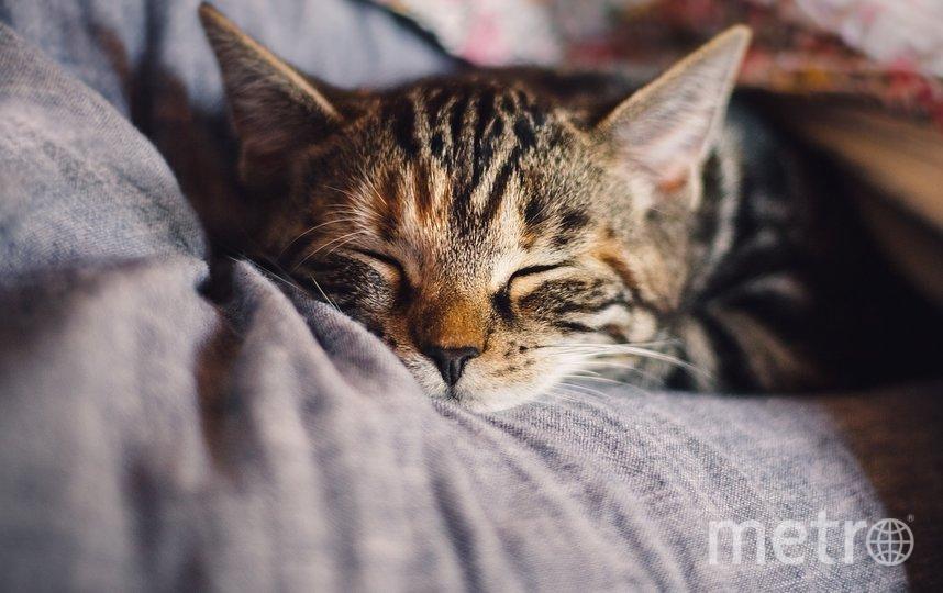 """Многое зависит от условий проживания кошек. Фото pixabay.com, """"Metro"""""""