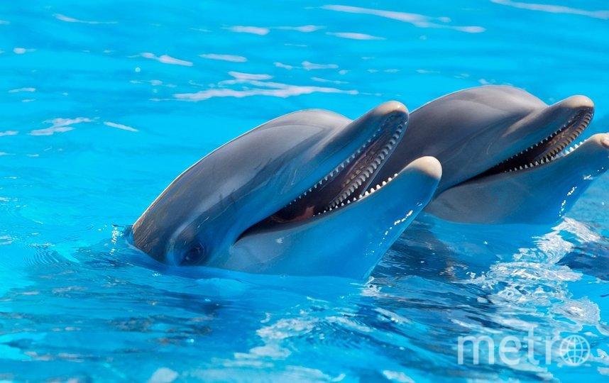 Петербургский дельфинарий закрывается и переезжает. Фото pixabay.com