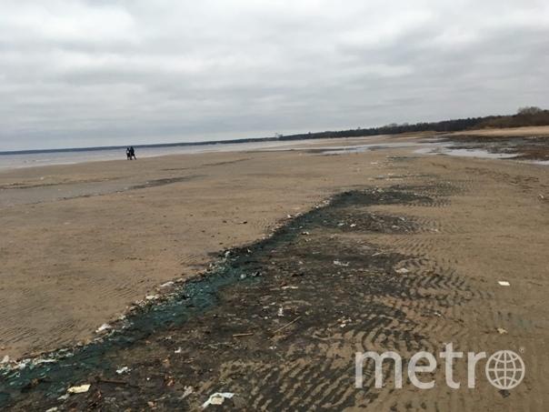 Так выглядит территория Дубковского пляжа. Фото https://vk.com/wall-51537231_5764