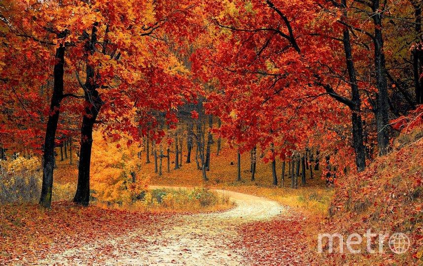 Благодаря проекту в столице появится больше деревьев. Фото pixabay.com