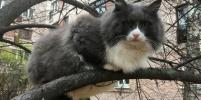 Забавные фото петербургских котиков присылают на конкурс