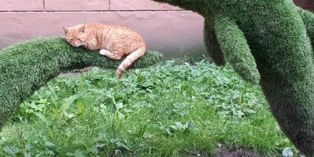 Высылаю Вам чудесное фото от моей мамы, сделанное летом на одной из петербургских улочек. Мне кажется, кот хорошо устроился!