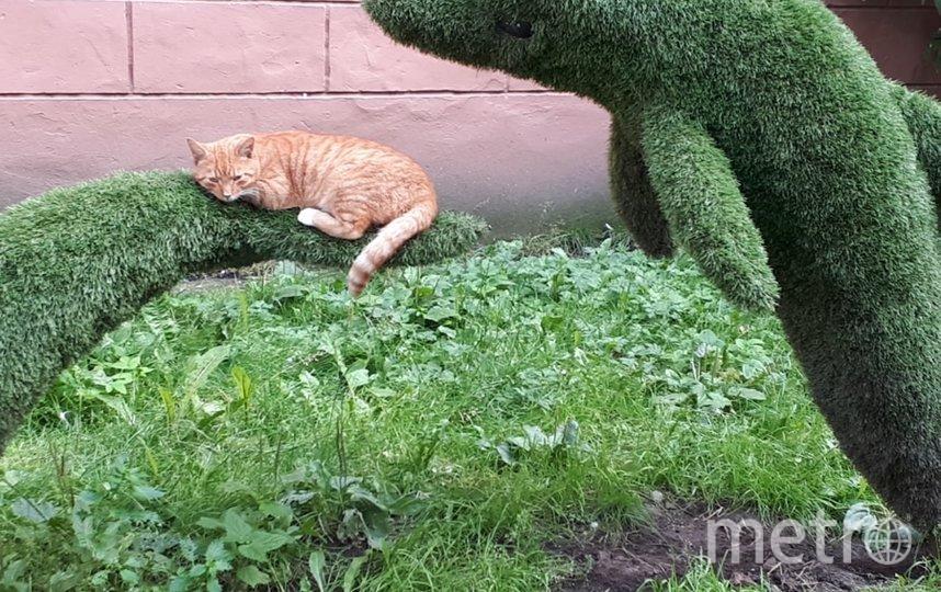 """Высылаю Вам чудесное фото от моей мамы, сделанное летом на одной из петербургских улочек. Мне кажется, кот хорошо устроился! Фото """"Metro"""""""
