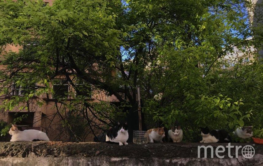 """Только что вернулась из Турции, где живу последние годы. Шлю вам уличных котиков, которых там успела отфотографировать. Фото """"Metro"""""""