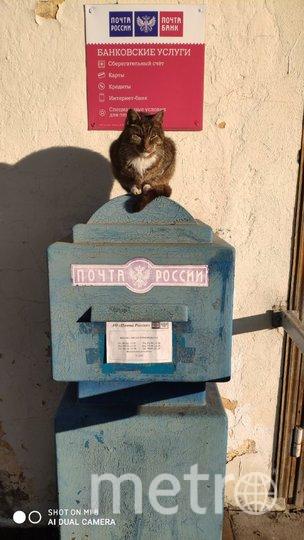"""Меня зовут Людмила Начатая. У нас в Стрельне около почты живёт кот. Добрые люди его кормят конечно. Однажды мы его увидели сидящим на почтовом ящике. Настоящий охранник почтовых отравлений. Фото """"Metro"""""""