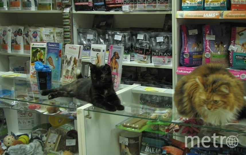 """""""дежурные коты"""" в ветклинике. Фото Наталия, """"Metro"""""""