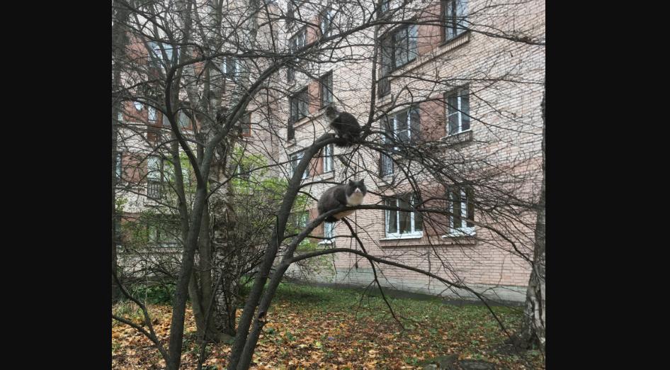 """""""Грачи"""" прилетели. Фото Яхонтов., """"Metro"""""""