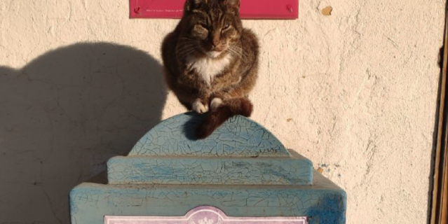 Почтовый кот.