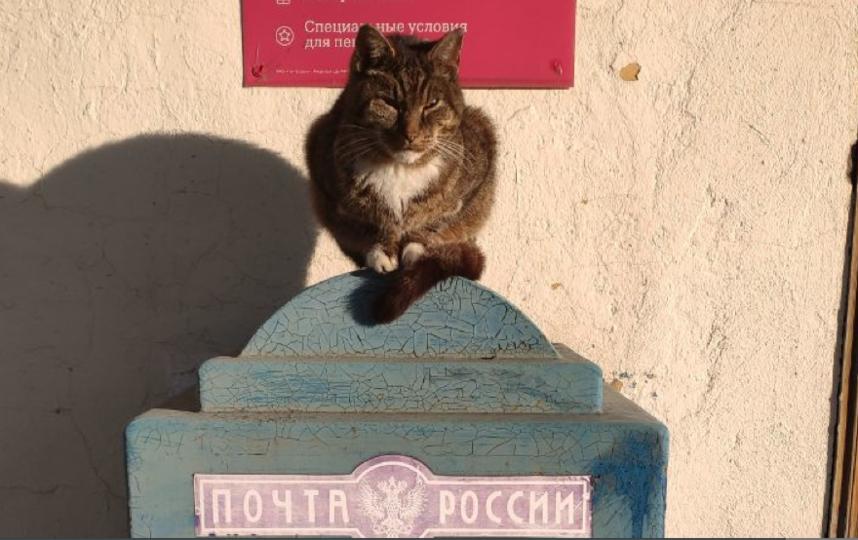 """Почтовый кот. Фото Людмила Начатая, """"Metro"""""""
