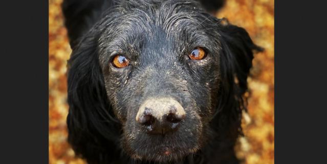 Собака Люпо умерла, прожив 9 лет.