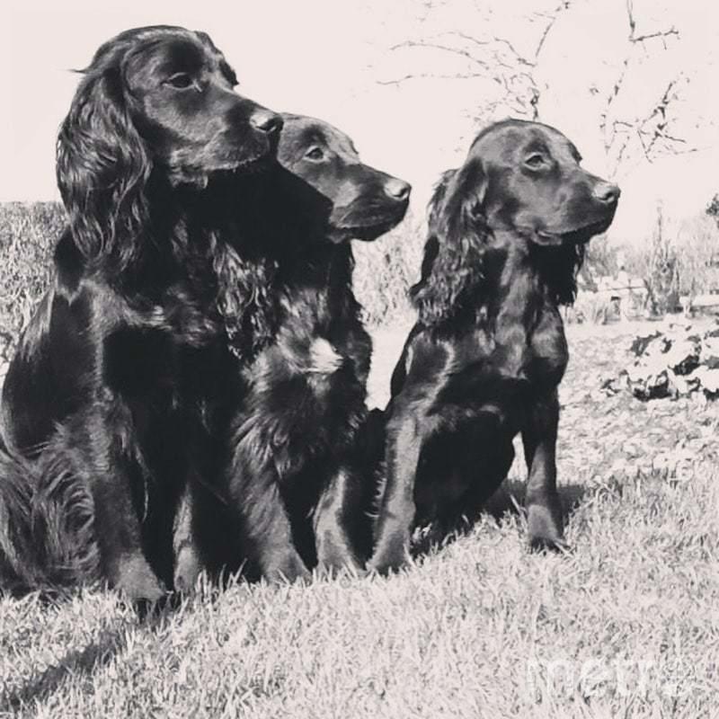 "Это собаки - родственники Люпо. Фото https://www.instagram.com/p/CH5qKXGApMs/, ""Metro"""